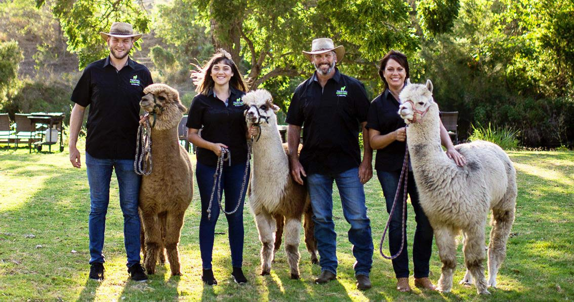 Full Day Canungra Valley _ - Alpacca - Tic Tac Tours